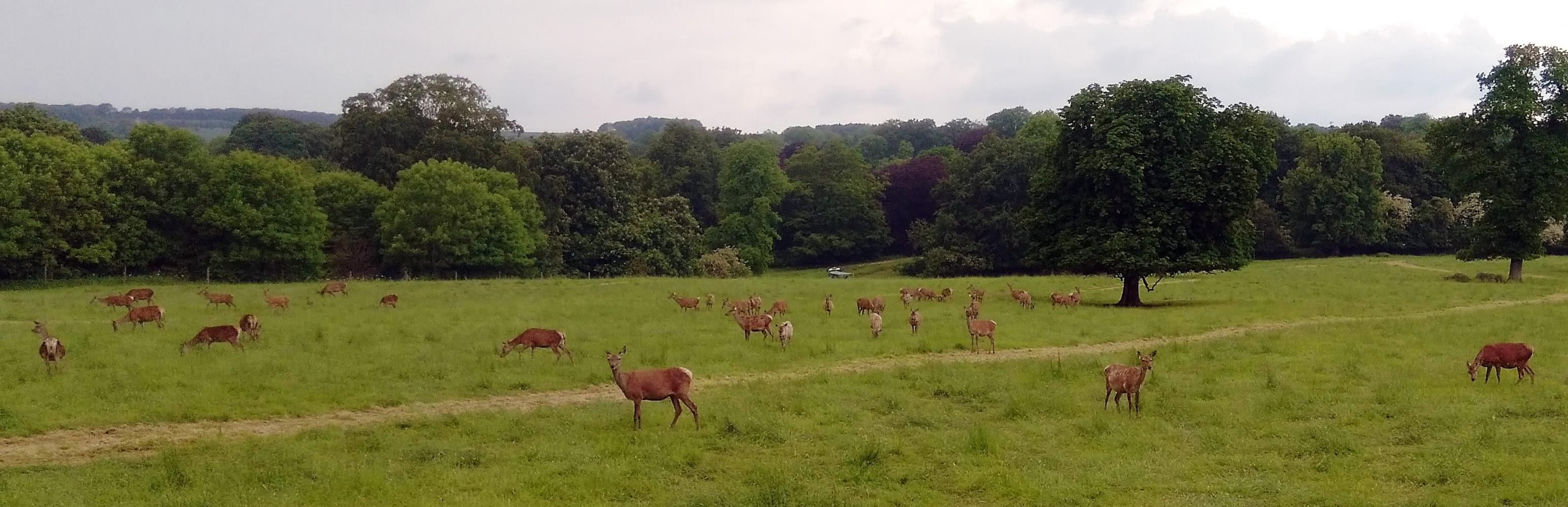 a sledmere deer safari