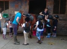 burnby equestrian (3)