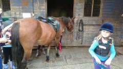 burnby equestrian (2)