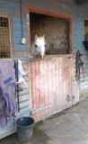burnby equestrian (4)