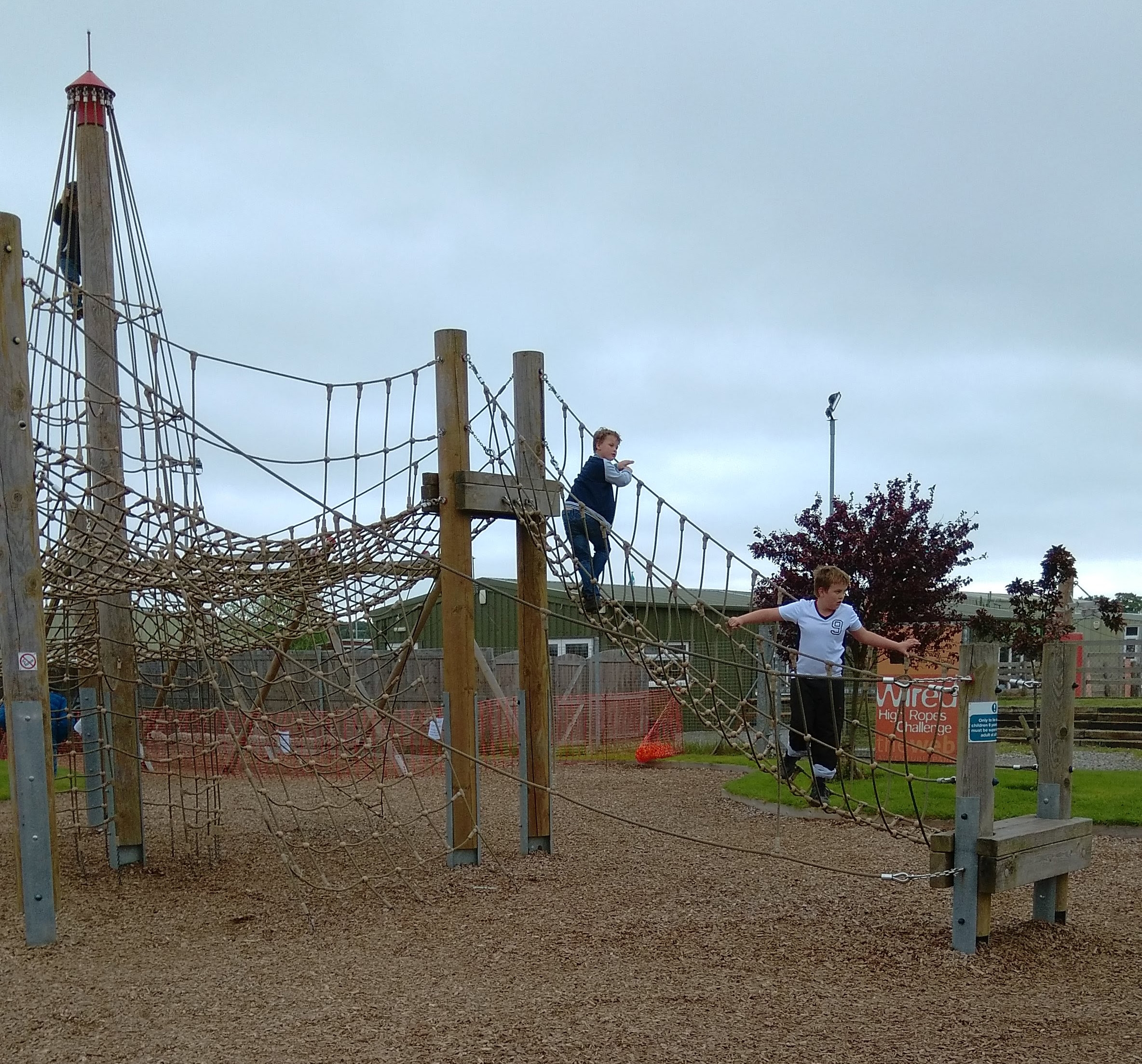 creepy crawlies climbing frame