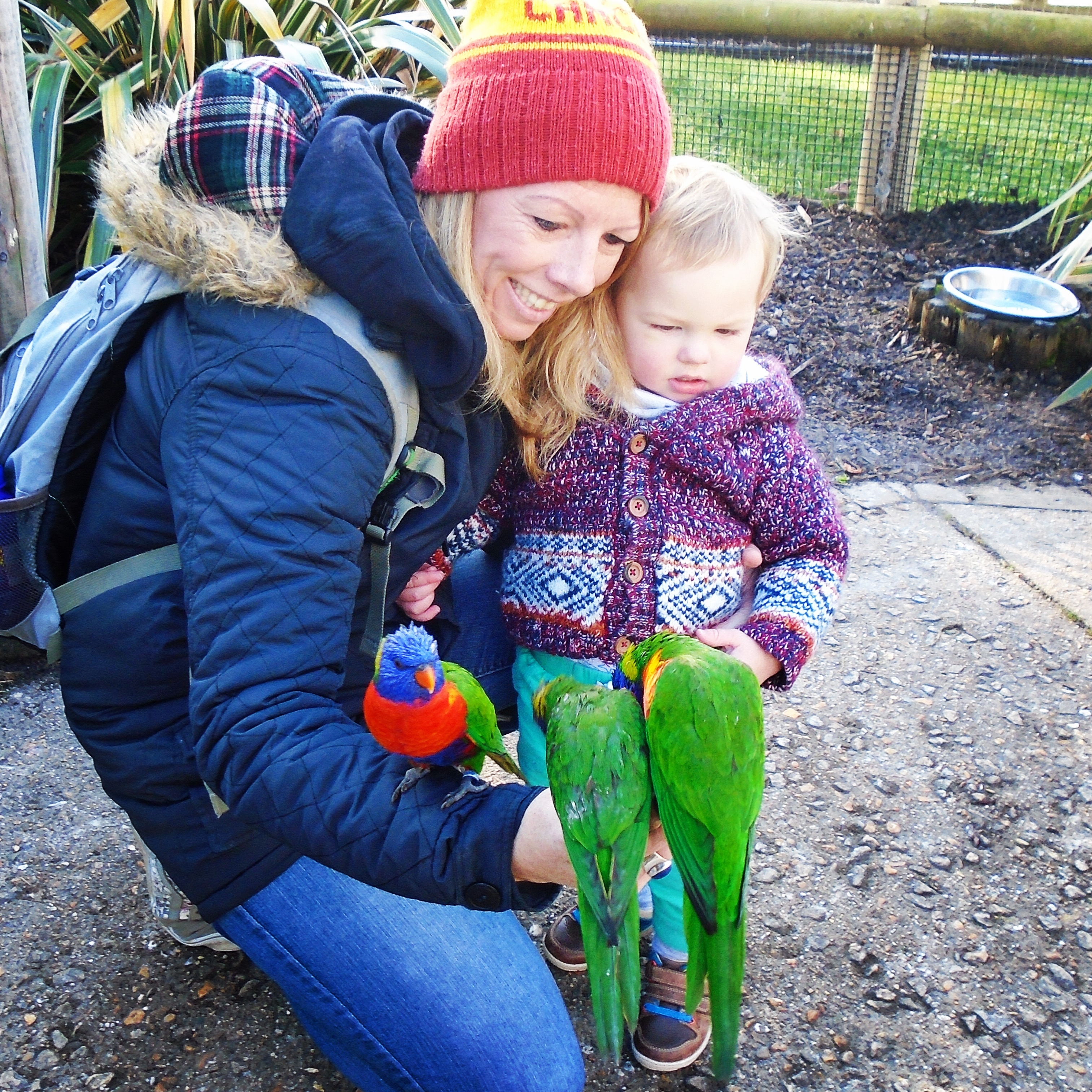 Drusillas Park and Zoo, East Sussex (7)