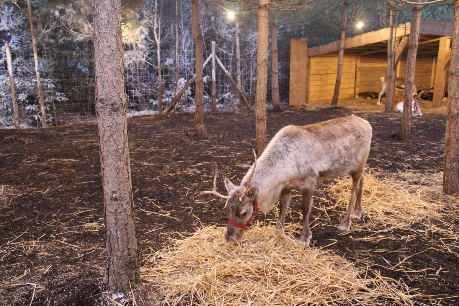 Best Santa in the UK Lapland UK (23)