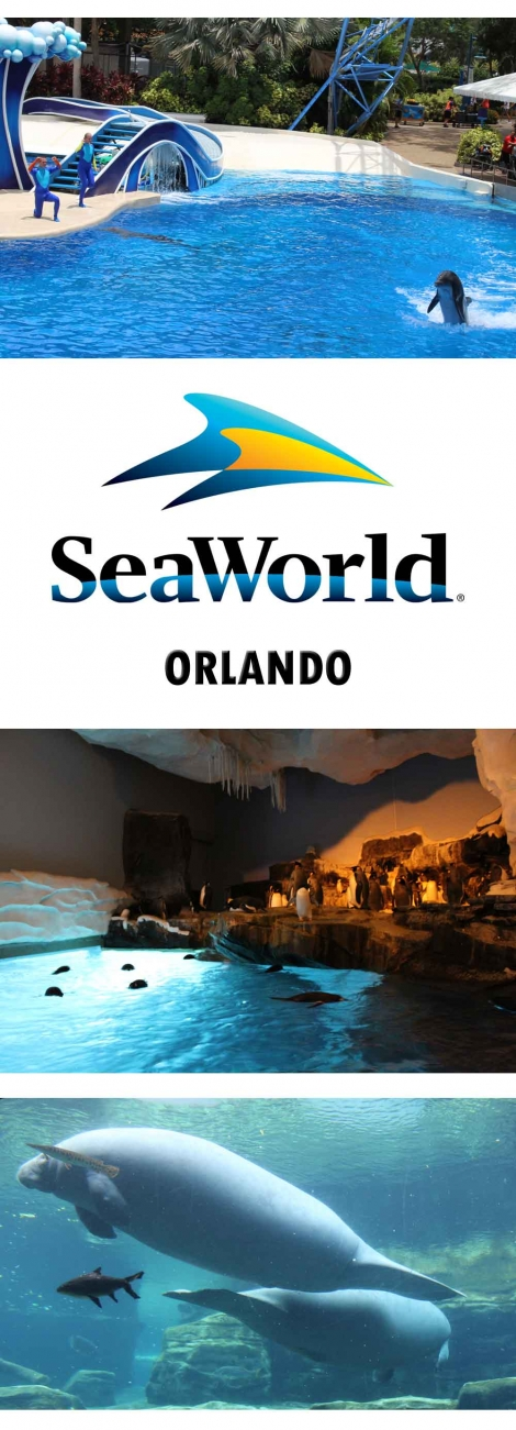A-review-of-Seaworld-Orlando-Florida