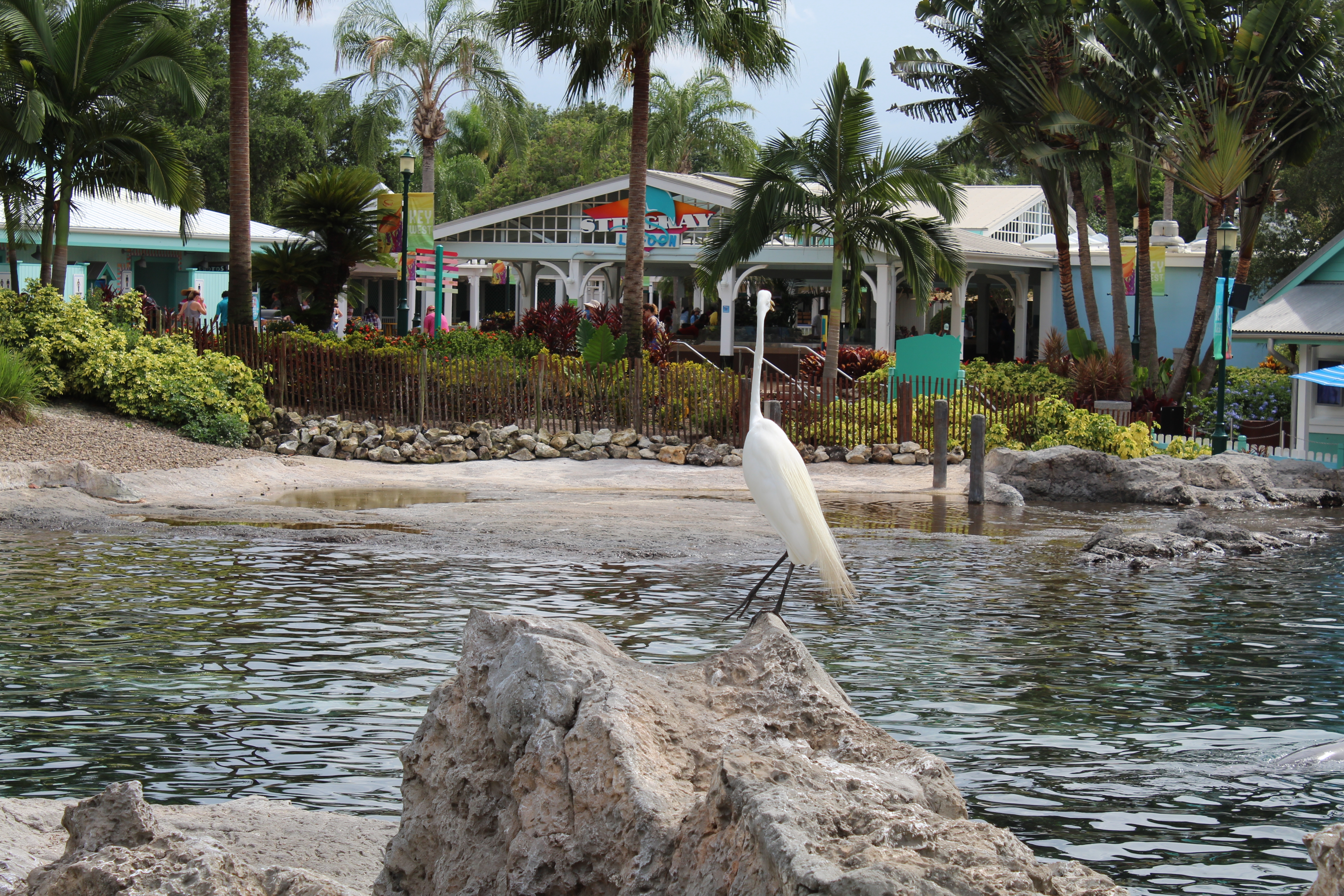 SeaWorld Orlando Florida Review (4)