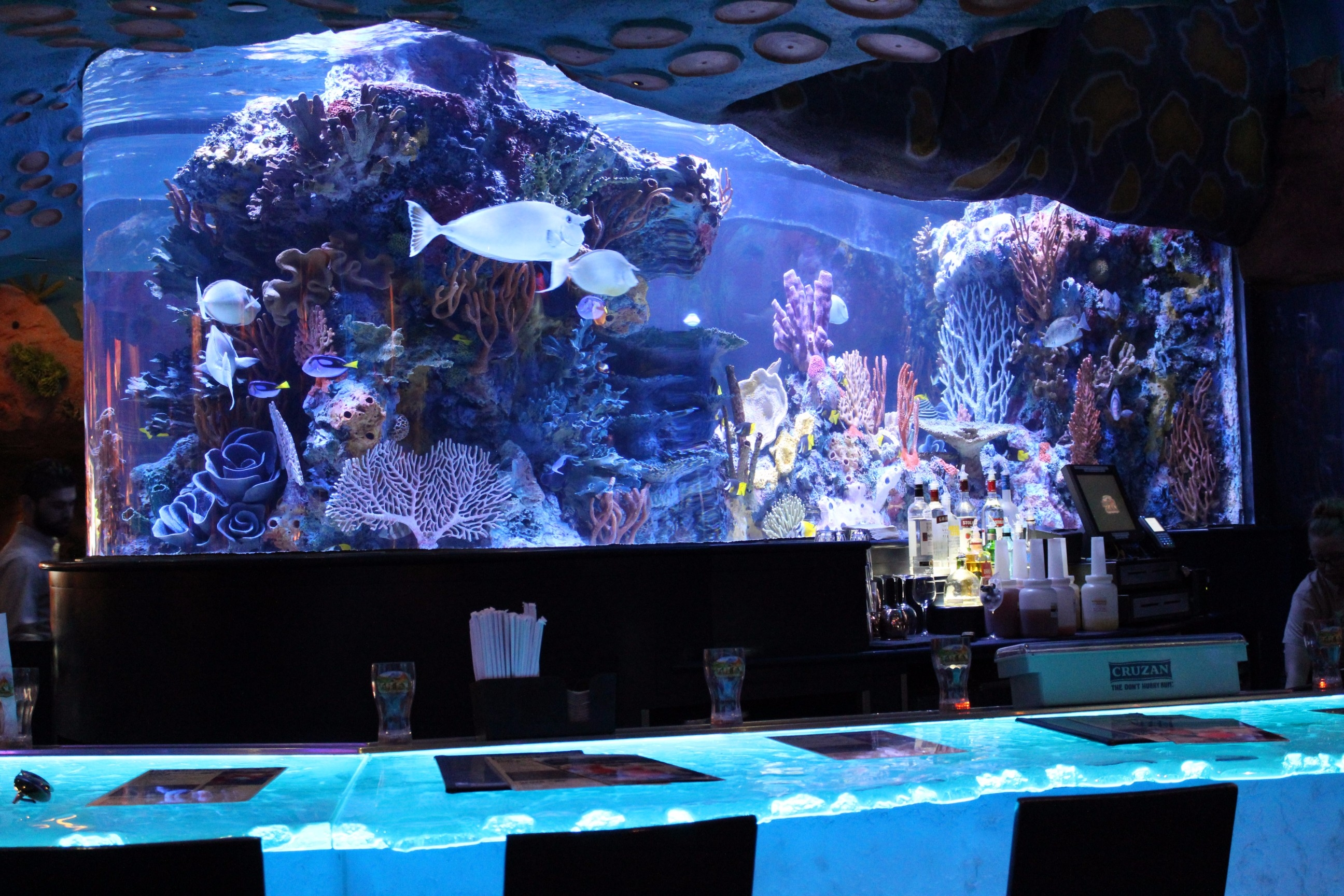TREX Food Photos Restaurant Review Disney Springs (1)