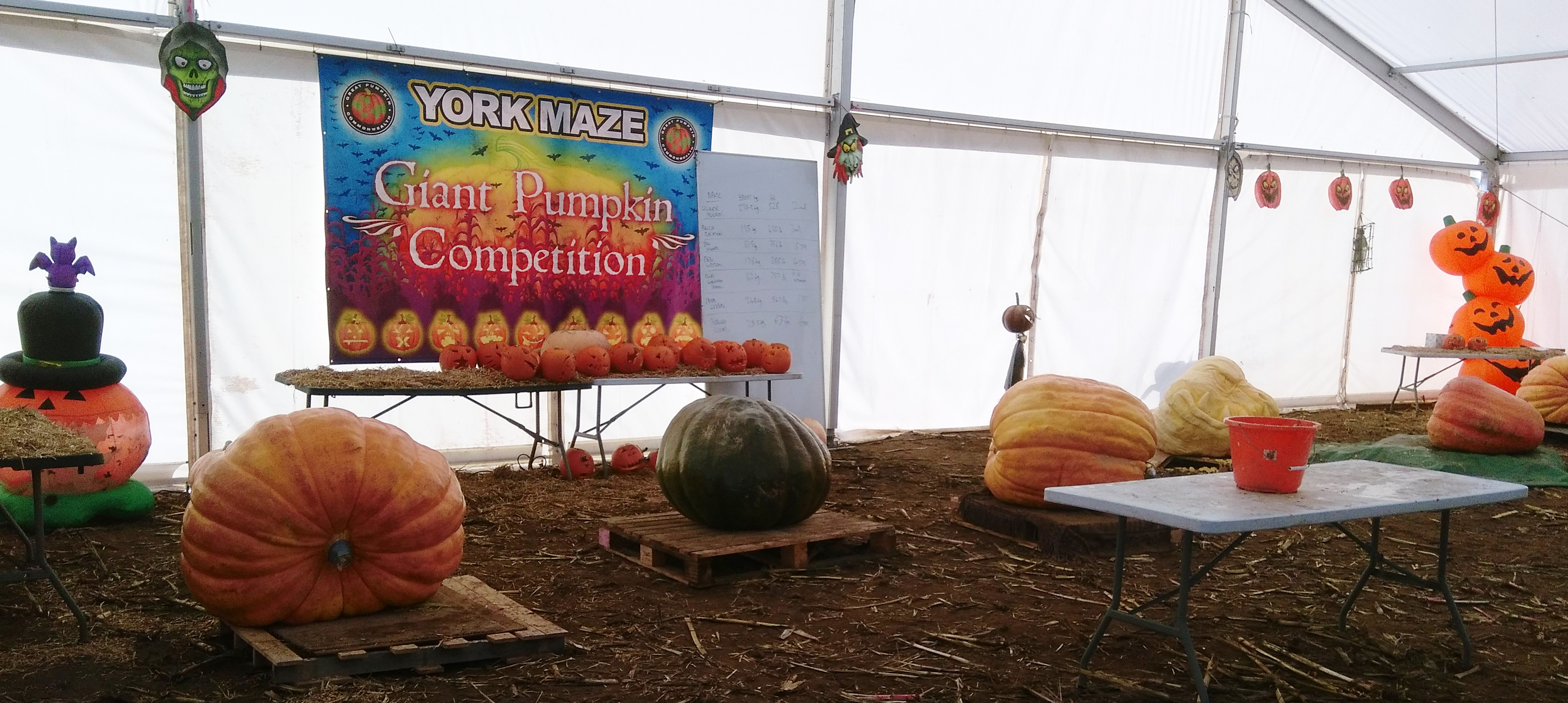 a York Maze Halloween (5)