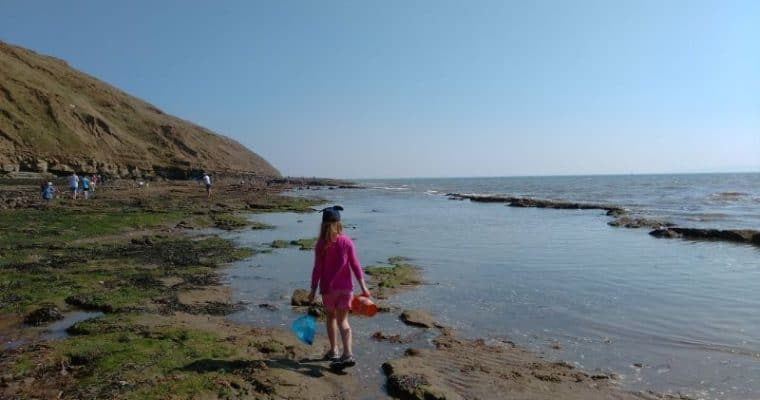 Filey Brigg – Great for Rockpooling with the Kids