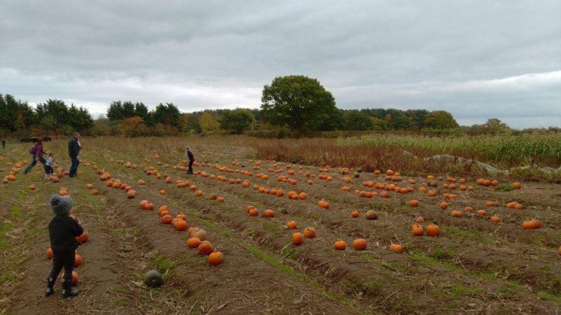 Pumpkin Patch Yorkshire