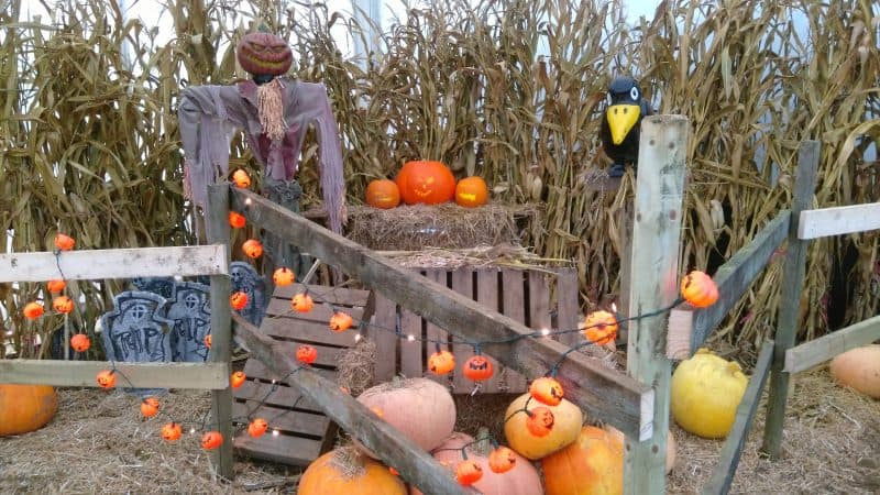 York Maze Hallowtween - Halloween Event