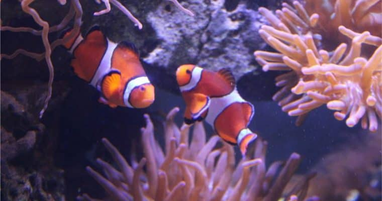 A Family Day Out at The Deep Aquarium, Hull