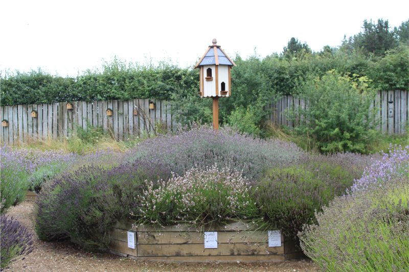 Wolds Way Lavender Review