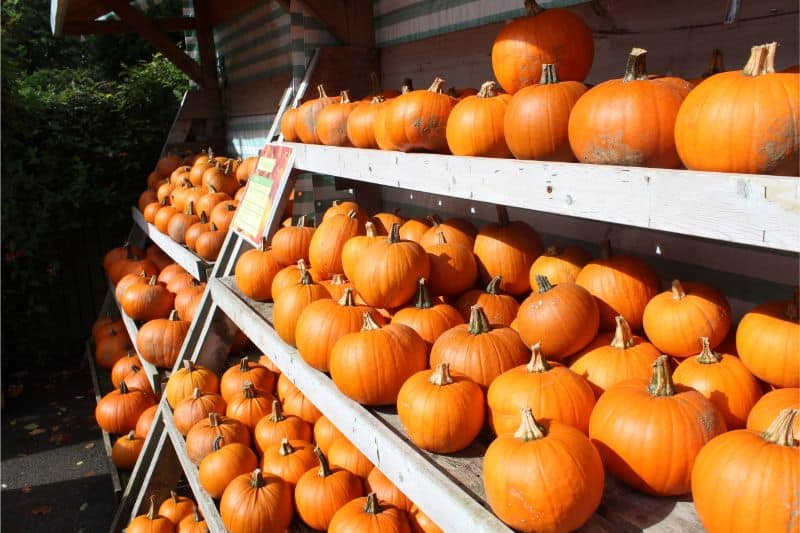 Pick Your Own Pumpkins at The Balloon Tree