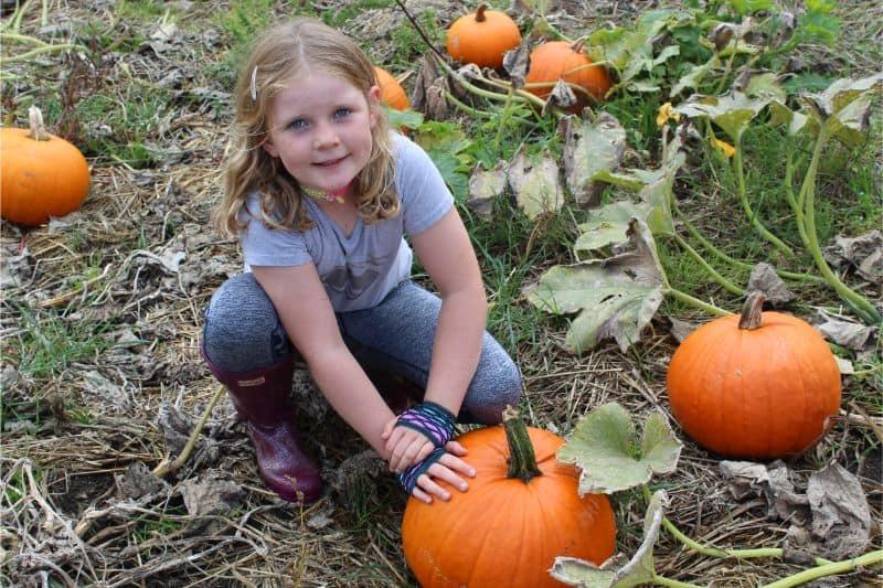 pumpkin picking in yorkshire