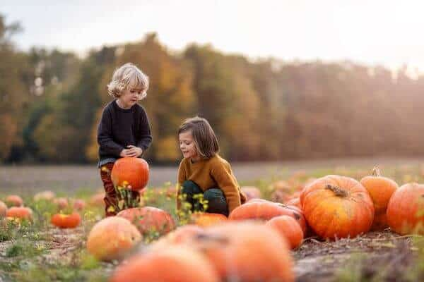 pumpkin patches yorkshire