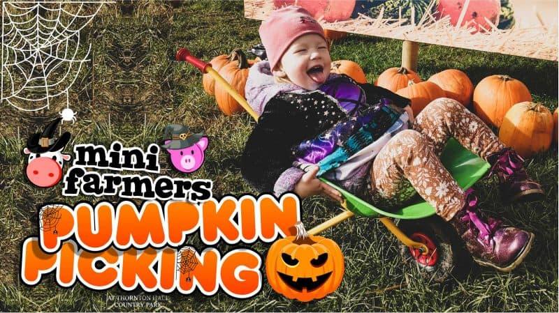 pumpkin picking yorkshire