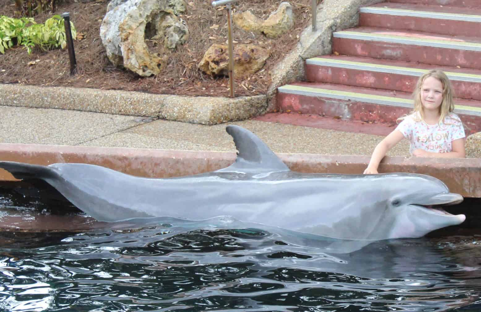 Meeting the Dolphins at SeaWorld, Orlando, Florida