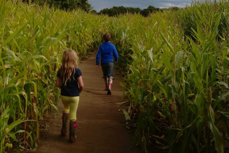 Things to do in York - York Maze